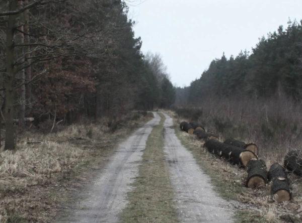 Zeitraffer Mosigkauer Heide